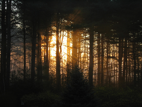 Fog Woods Sunrise England