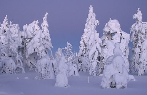 Snow Trees Levi Winter Finland