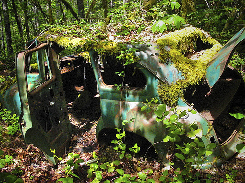 lost car woods abandoned